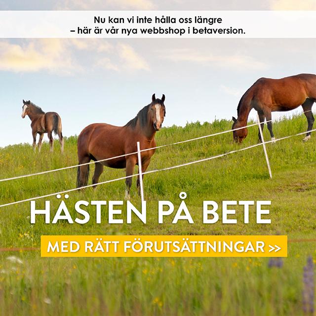 Hästen på bete - med rätt förutsättningar